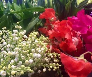 Fleurs Sauvages - Galerie photos